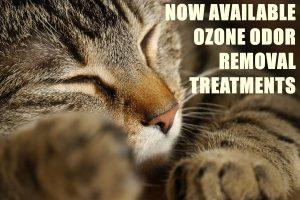 ozone-cat